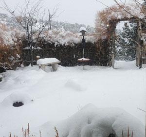 Benefits of snow to plants in Grand Rapids MI