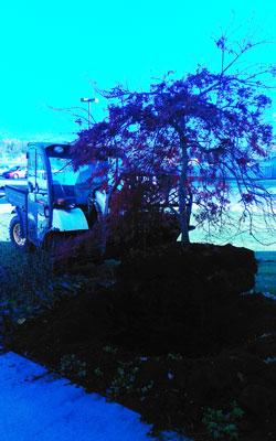 transplanting-trees-ada-mi